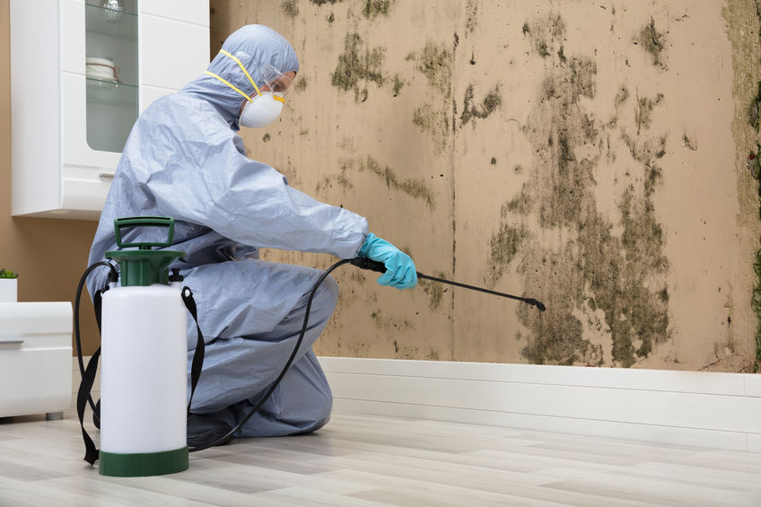 Man In Protective Uniform Spraying Solution On Mold Damaged Wall With Sprayer